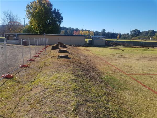 Netball Courts Post trees being removed
